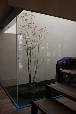 中庭の苔を敷きました_f0170331_1720320.jpg