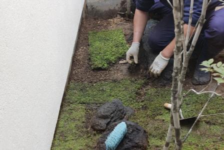 中庭の苔を敷きました_f0170331_17203445.jpg