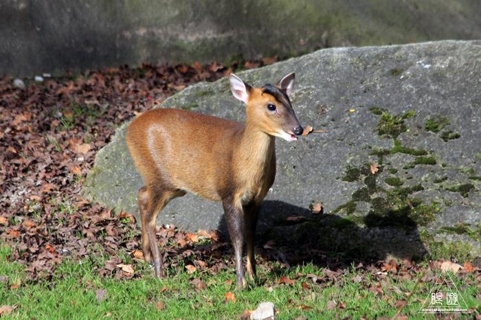 361 Hellabrunn Zoo ~ミュンヘンの動物園~_c0211532_21321327.jpg