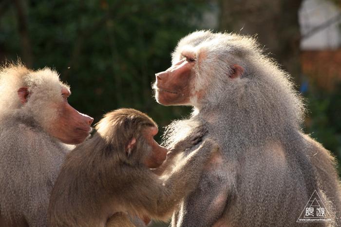 361 Hellabrunn Zoo ~ミュンヘンの動物園~_c0211532_21354265.jpg