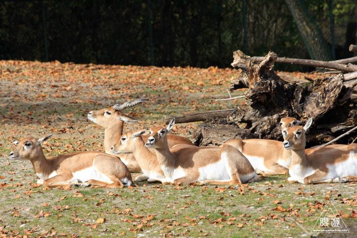 361 Hellabrunn Zoo ~ミュンヘンの動物園~_c0211532_2159777.jpg