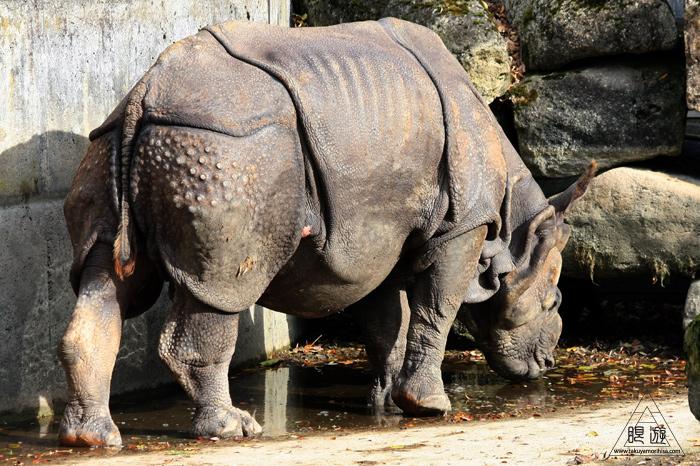 361 Hellabrunn Zoo ~ミュンヘンの動物園~_c0211532_22154510.jpg