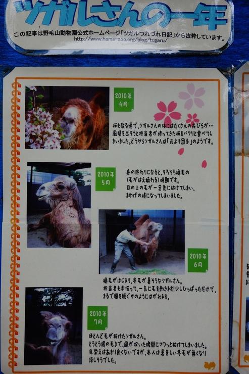 横浜市立野毛山動物園散策~FPD International 2013 その8_a0287336_2211244.jpg