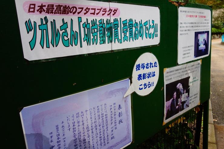 横浜市立野毛山動物園散策~FPD International 2013 その8_a0287336_22113479.jpg