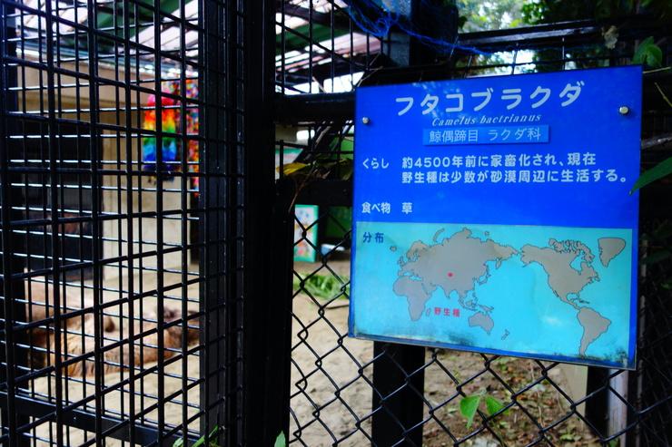 横浜市立野毛山動物園散策~FPD International 2013 その8_a0287336_2213020.jpg