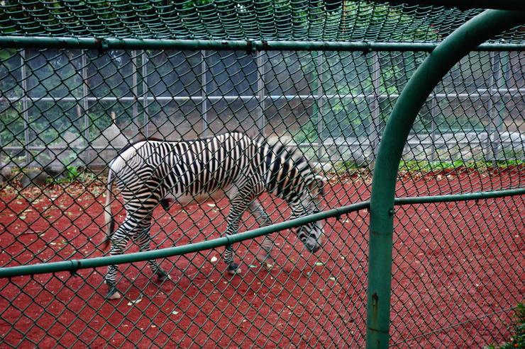 横浜市立野毛山動物園散策~FPD International 2013 その8_a0287336_22143789.jpg