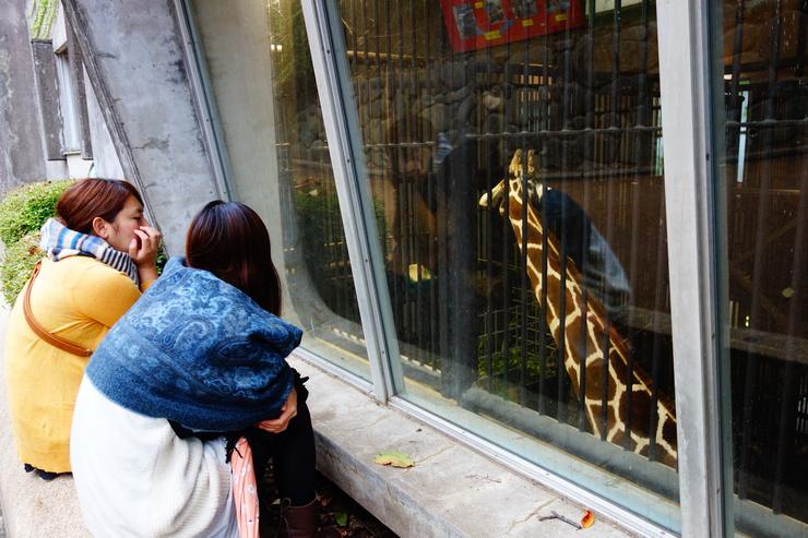 横浜市立野毛山動物園散策~FPD International 2013 その8_a0287336_2215215.jpg