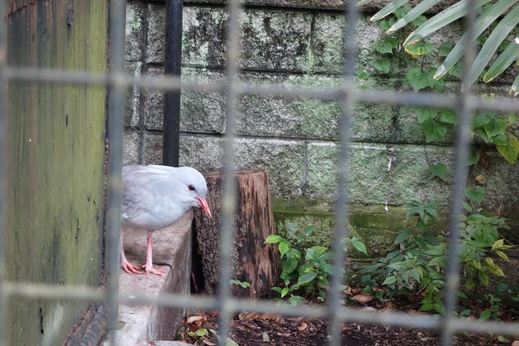 横浜市立野毛山動物園散策~FPD International 2013 その8_a0287336_22162271.jpg