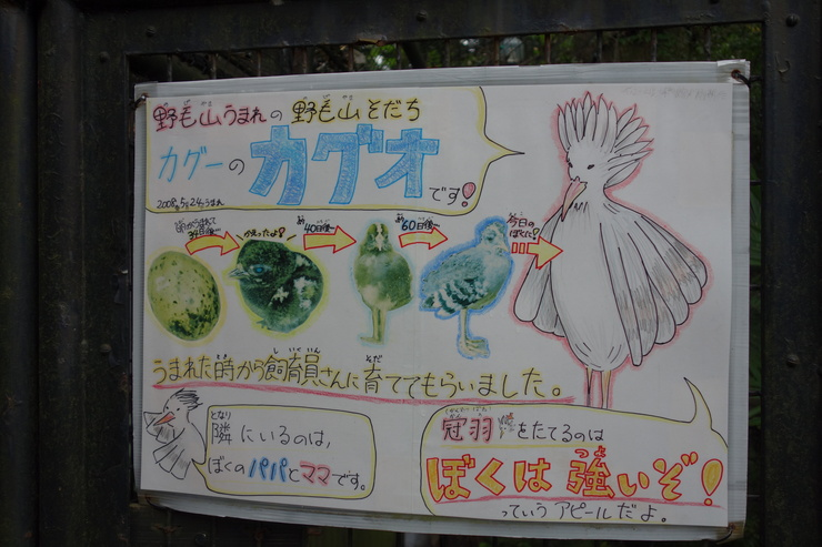 横浜市立野毛山動物園散策~FPD International 2013 その8_a0287336_22164965.jpg