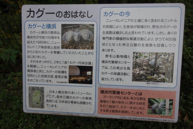 横浜市立野毛山動物園散策~FPD International 2013 その8_a0287336_22173654.jpg