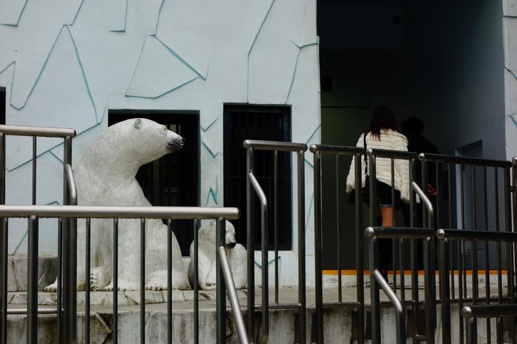 横浜市立野毛山動物園散策~FPD International 2013 その8_a0287336_22233869.jpg