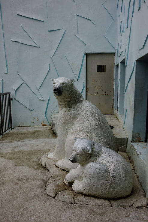 横浜市立野毛山動物園散策~FPD International 2013 その8_a0287336_2224123.jpg