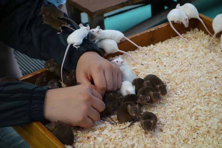 横浜市立野毛山動物園散策~FPD International 2013 その8_a0287336_22524521.jpg