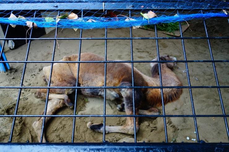 横浜市立野毛山動物園散策~FPD International 2013 その8_a0287336_2284670.jpg