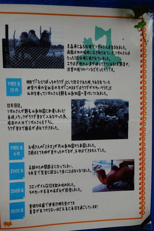 横浜市立野毛山動物園散策~FPD International 2013 その8_a0287336_2292077.jpg