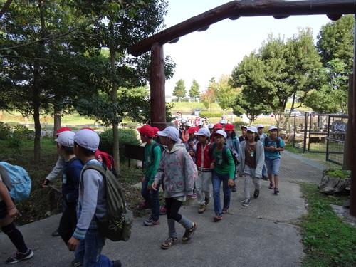 岸和田市立東光小学校遠足サポート   in  せんなん里海公園うみべの森_c0108460_19404069.jpg