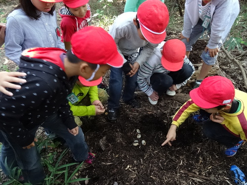 岸和田市立東光小学校遠足サポート   in  せんなん里海公園うみべの森_c0108460_19551193.jpg