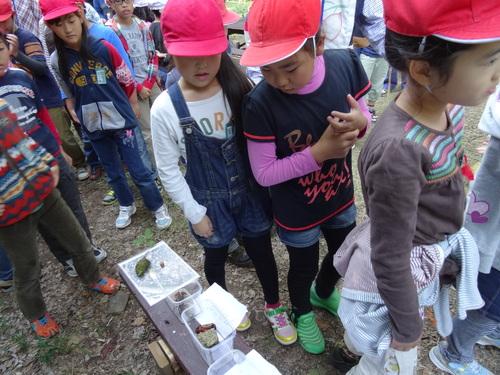 岸和田市立東光小学校遠足サポート   in  せんなん里海公園うみべの森_c0108460_20403579.jpg