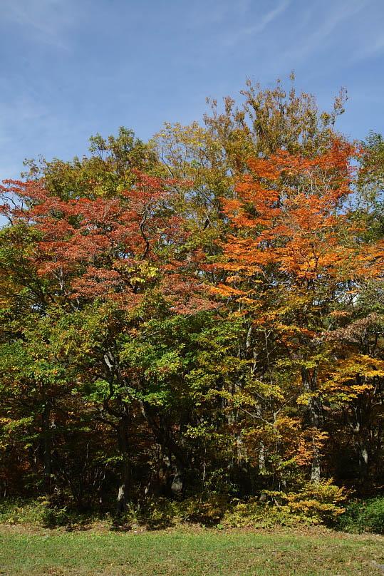 西郷村 甲子高原の紅葉 その2_e0165983_1820532.jpg