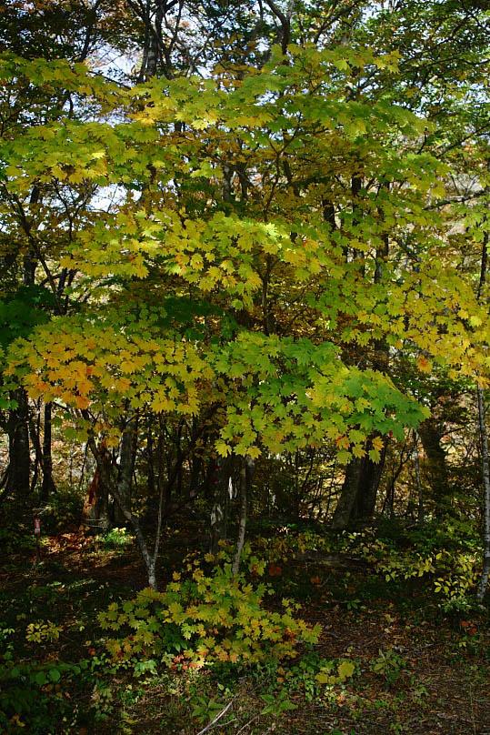 西郷村 甲子高原の紅葉 その2_e0165983_1826763.jpg
