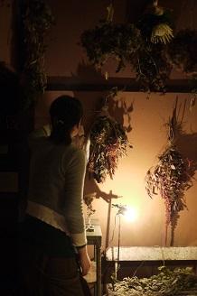 今日からスタート 「フボーと植物展 白Ⅱ」_f0226293_732618.jpg
