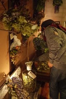 今日からスタート 「フボーと植物展 白Ⅱ」_f0226293_7353058.jpg