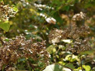 秋・冬も花は楽しめます_a0233896_14221610.jpg