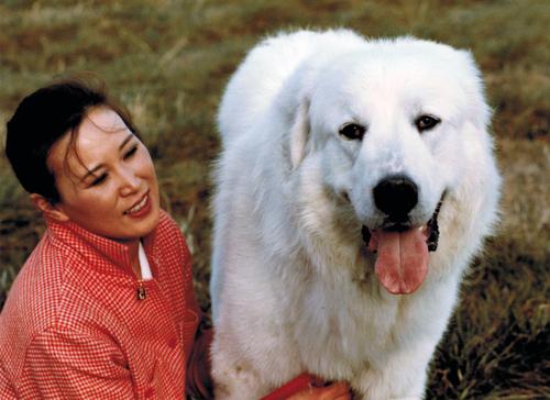 40年前の犬の記憶_d0290407_18185115.jpg