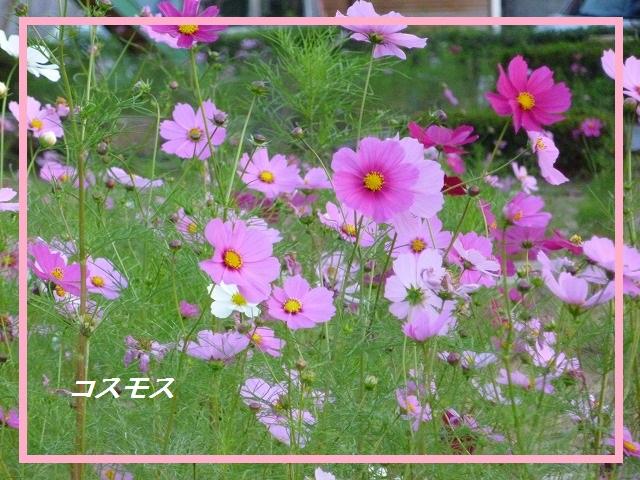 d0172010_772974.jpg