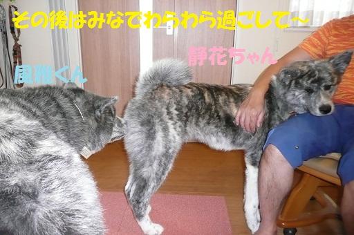 f0121712_15443583.jpg