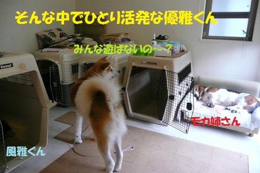 f0121712_1545126.jpg