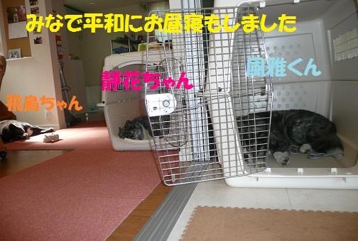 f0121712_1545562.jpg