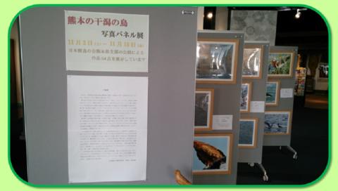 2013年11月2~15日「野鳥パネル展」♪_b0228113_9292861.png