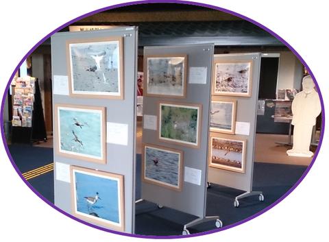 2013年11月2~15日「野鳥パネル展」♪_b0228113_9295677.png