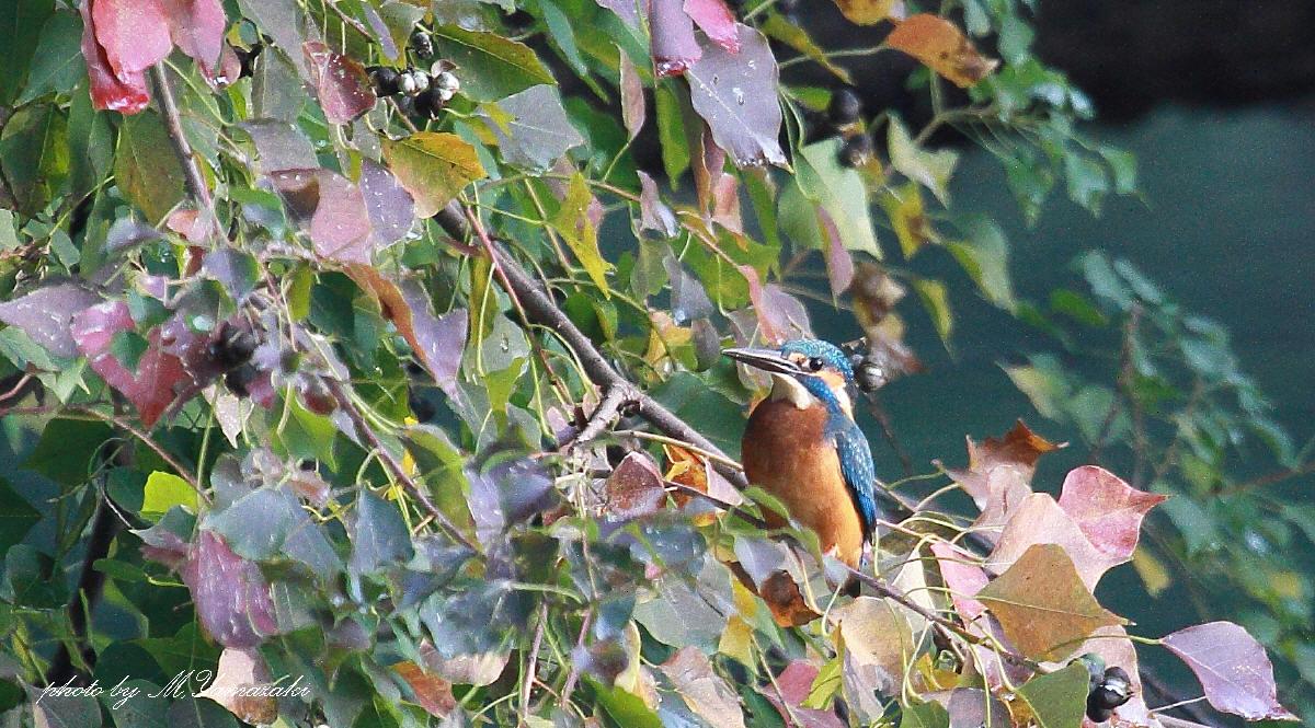 HPで出会った鳥達_c0217255_16423948.jpg