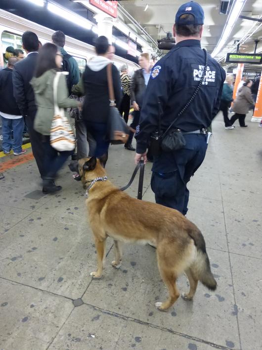 働く犬の種類【自由研究】。どんな仕事か調べてみ …