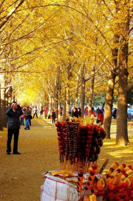 ■ 北京の銀杏並木_e0094583_2312048.jpg