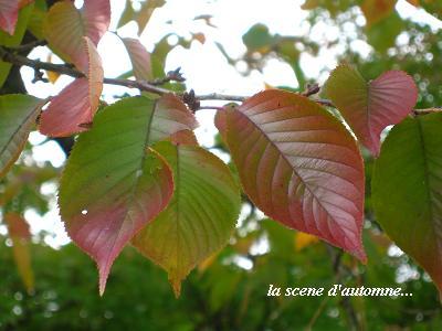 色づく季節☆クリスマスに向けて・・・_c0098807_20464083.jpg