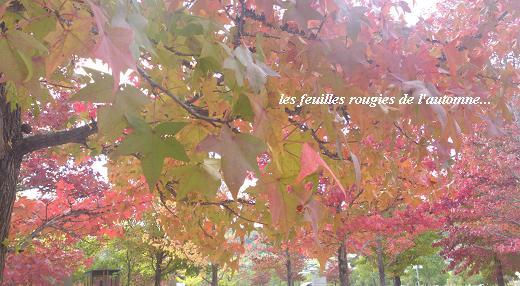 色づく季節☆クリスマスに向けて・・・_c0098807_2049487.jpg