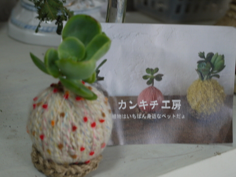 2013 益子 秋の陶器市③。_b0116313_21533737.jpg