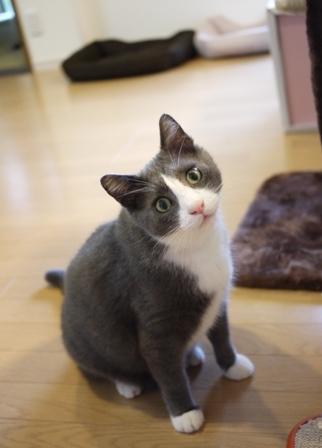 猫のお友だち カン太くんルノーちゃん編。_a0143140_214119100.jpg