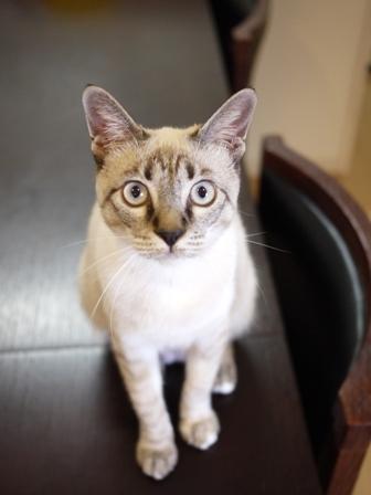 猫のお友だち カン太くんルノーちゃん編。_a0143140_21415196.jpg