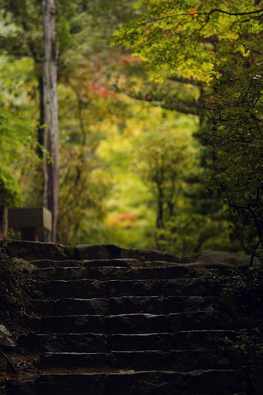 三滝寺の紅葉はちょっと早過ぎた…orz_f0189086_19325168.jpg