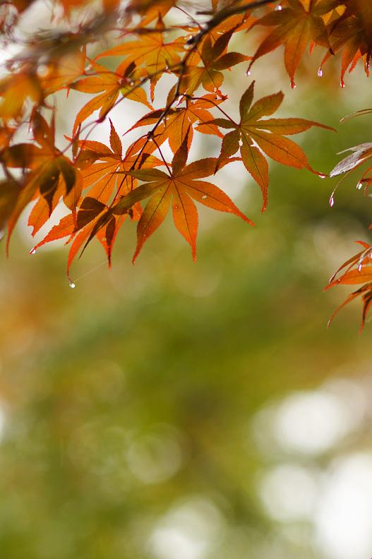 三滝寺の紅葉はちょっと早過ぎた…orz_f0189086_19331064.jpg