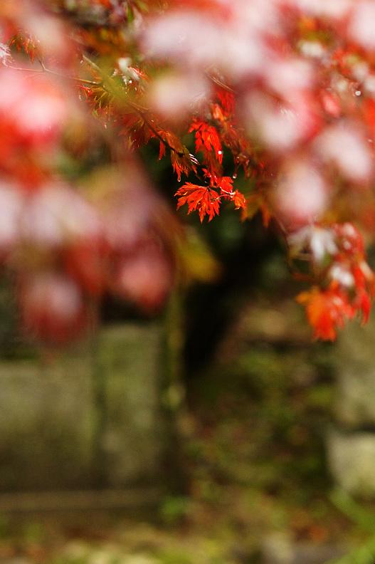 三滝寺の紅葉はちょっと早過ぎた…orz_f0189086_1935153.jpg