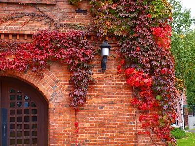 深まる秋のリズムに合わせて_d0167002_20471087.jpg