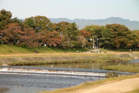 桜が紅葉 鴨川上流_e0048413_12153753.jpg