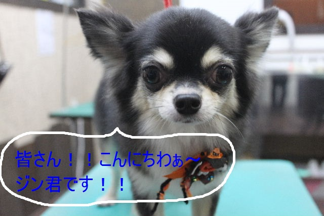 b0130018_03041100.jpg