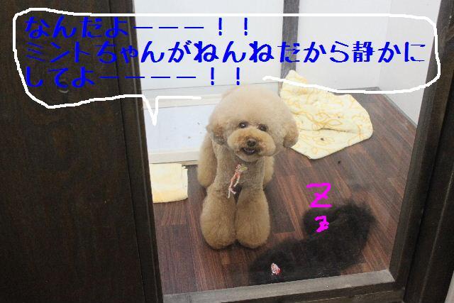 遺伝子_b0130018_1415972.jpg