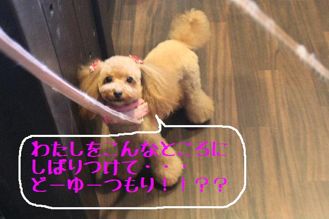 遺伝子_b0130018_14201569.jpg